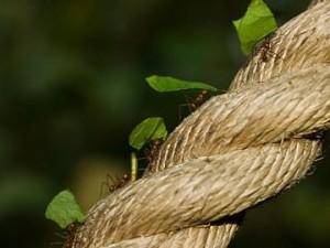 ant-or-grasshopper